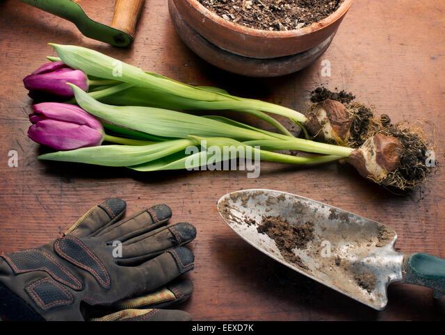 bulb planting stock photos bulb planting stock images. Black Bedroom Furniture Sets. Home Design Ideas