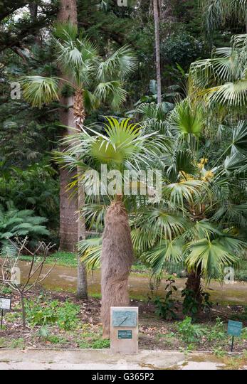 Palmaceae stock photos palmaceae stock images alamy for Bodas jardin botanico malaga