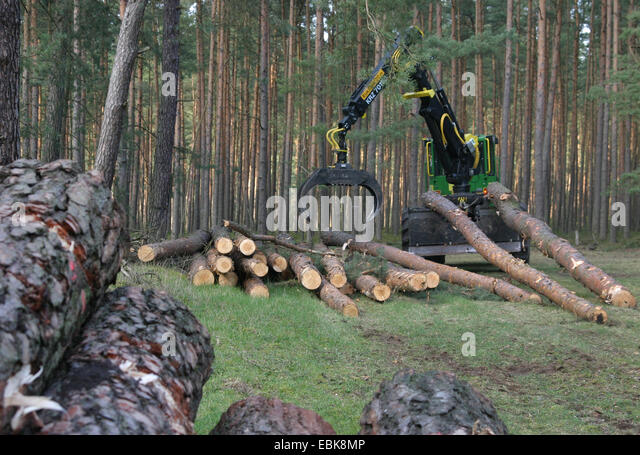 Timberjacks stock photos timberjacks stock images alamy for Pine tree timber