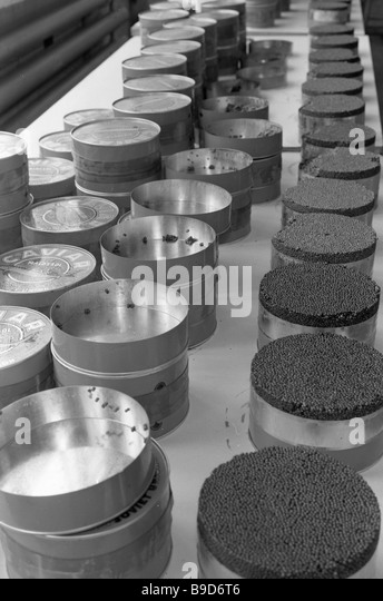 Fish caviar cannery stock photos fish caviar cannery for Caviar comes from what fish