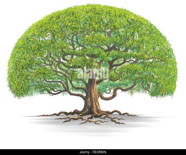 Old Tree Cartoon Www Pixshark Com Images Galleries