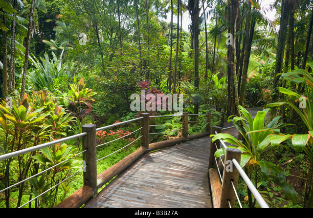 Charmant Boardwalk Through Hawaii Tropical Botanical Gardens Near Hilo Big Island  Hawaii USA   Stock Image
