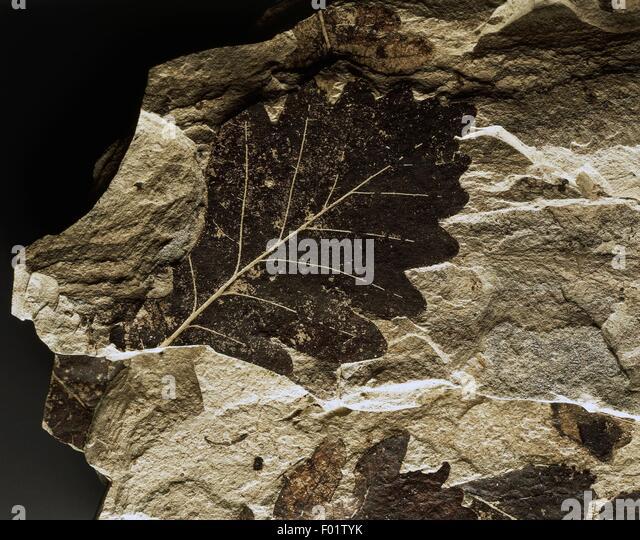 Quaternary glaciation