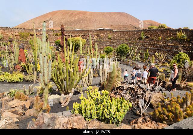 lanzarote cactus garden or jardin de cactus designed by local artist cesar manrique lanzarote