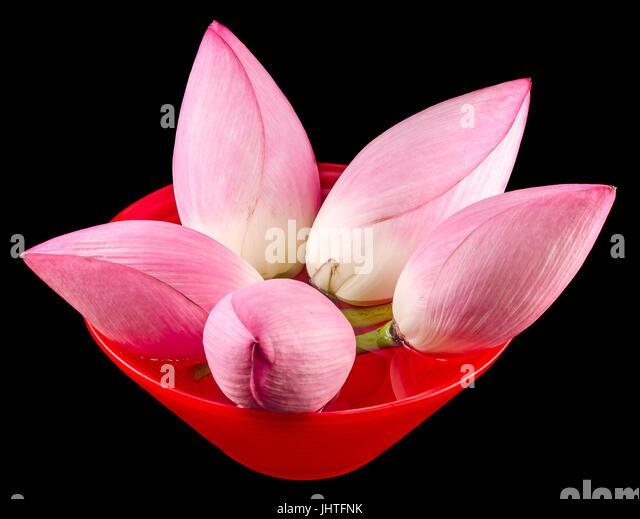 Lotus Flowers In A Vase Stock Photos Lotus Flowers In A Vase Stock