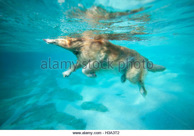 Dog Swimming In Ocean Stock Photos Dog Swimming In Ocean Stock Images Alamy