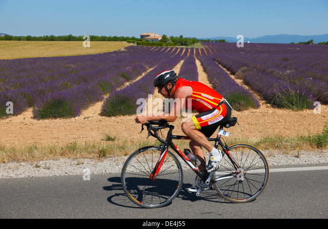 France Lavender Bicycle Stock Photos France Lavender Bicycle