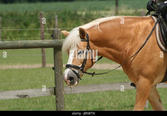 Happy Horses - Care Company - Kinder des Windes  …