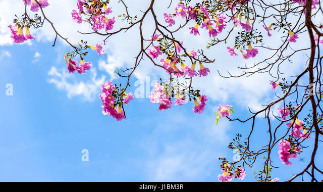 Cherry Blossoms Asian Dating Already A Member Toggle Clamps