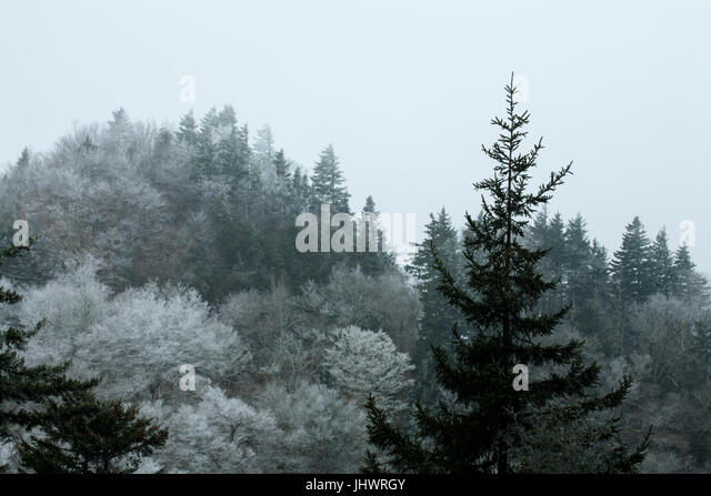 Frosty Morning on Newfound Gap Road, Great Smoky Mtns National Park - Stock Image