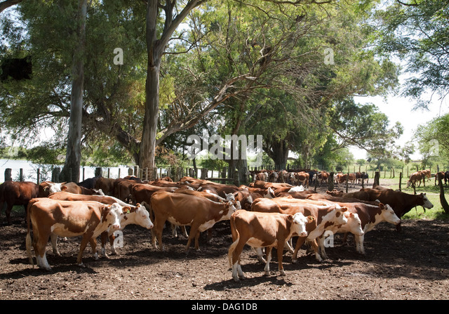 Bovine ranch stock photos bovine ranch stock images alamy for Db ranch