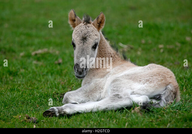 Odd One Out Animal Stock Photos & Odd One Out Animal Stock ...