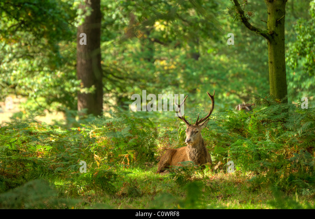 Landscaping Ties Red Deer : Richmond park stock photos images alamy