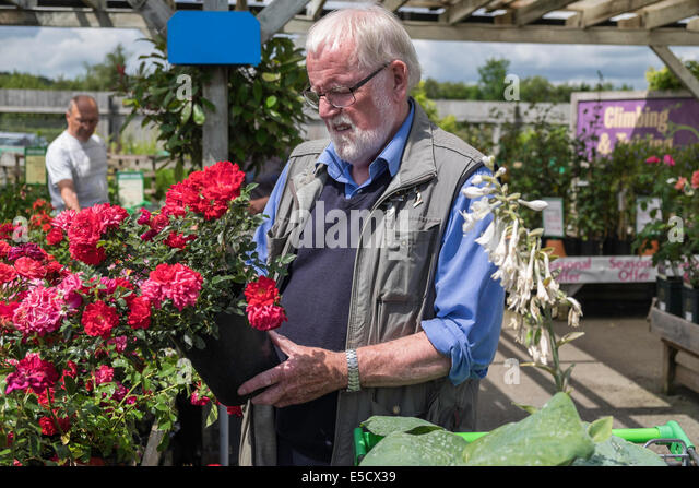 Gorgeous Potted Rose Stock Photos  Potted Rose Stock Images  Alamy With Lovely Older Man Selecting Potted Rose In Garden Centre On Summers Day Uk  Stock  Image With Astounding The Garden Party And Other Stories Pdf Also Gardening For Beginners In Addition Plans For Garden Planters Wooden And How Late Is Busch Gardens Open As Well As Gardens To Visit In Scotland Additionally Garden Cart With Seat From Alamycom With   Lovely Potted Rose Stock Photos  Potted Rose Stock Images  Alamy With Astounding Older Man Selecting Potted Rose In Garden Centre On Summers Day Uk  Stock  Image And Gorgeous The Garden Party And Other Stories Pdf Also Gardening For Beginners In Addition Plans For Garden Planters Wooden From Alamycom