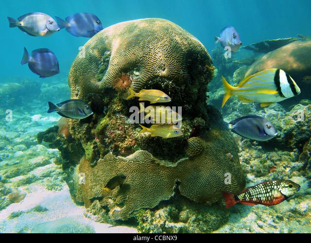 In caribbean reef stock photos in caribbean reef stock for Caribbean reef fish