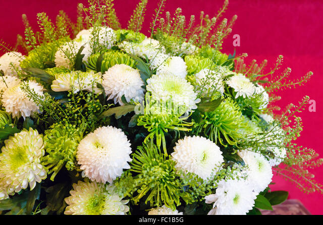 White Chrysanthemum Flowers Stock Photos & White ...