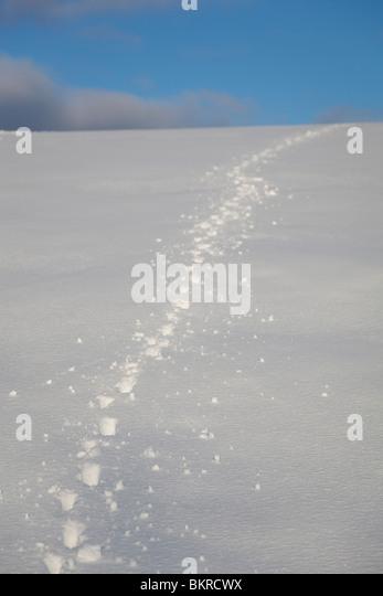 Dog tracks stock photos dog tracks stock images alamy dog tracks on snow stock image publicscrutiny Choice Image