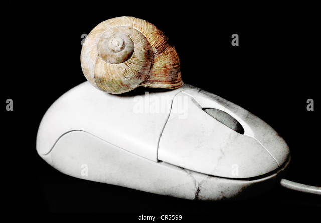Two Snail Shells Stock Photos & Two Snail Shells Stock Images - Alamy