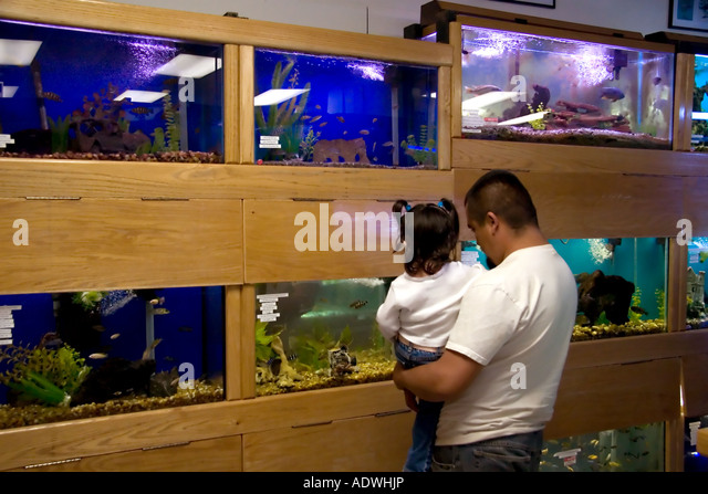 Tropical freshwater fish stock photos tropical for Fish stores in utah