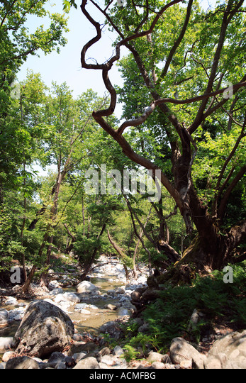 Trees Unspoiled Valley Verdant Stock Photos & Trees ...