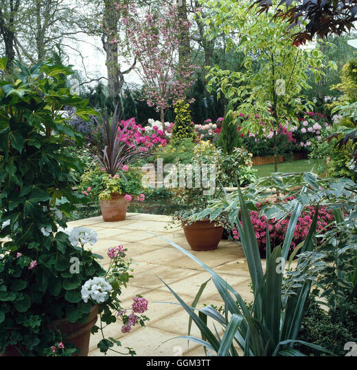 Patio   With Containers Of Shrubs Incluing X Fatshedera Cordyline And  Photinia. PHS021588 Pho