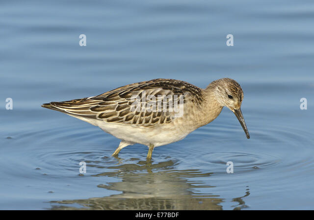 ruff hair styles ruff stock photos amp ruff stock images alamy 8884