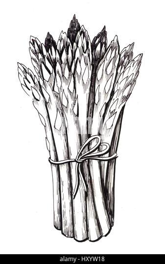 Asparagus Drawing Stock Photos