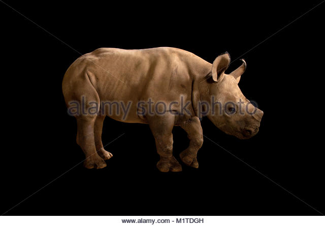 Are many Artwork Of Athens Georgia Free Rhinos Dating has and stays