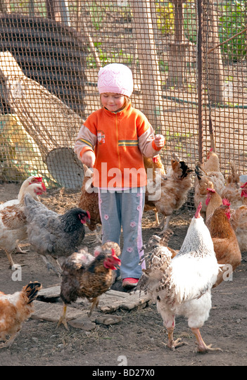 Feeding Chickens Stock Photos & Feeding Chickens Stock ...