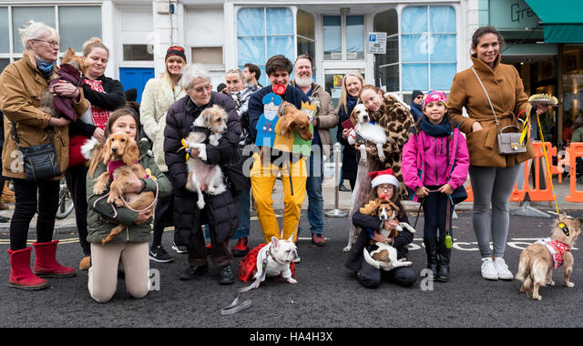 Judges And Owners With Their Dogs In The