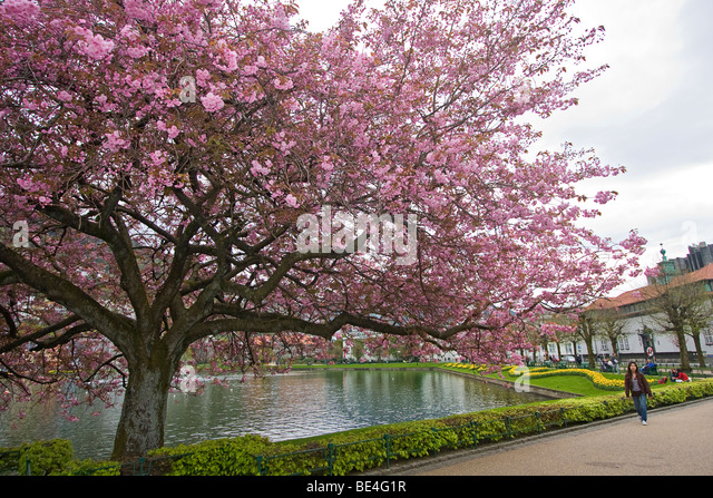 Cherry Blossoms Asian Dating Already A Member Toggle Coat