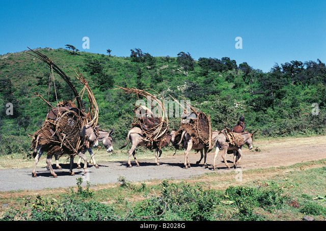 Donkey Panniers Stock Photos & Donkey Panniers Stock Images - Alamy