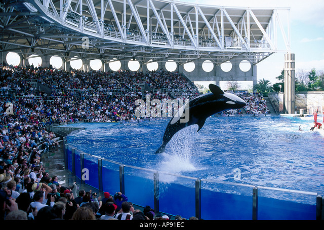 Killer whale sea world florida stock photos killer whale for Pool show in orlando 2016