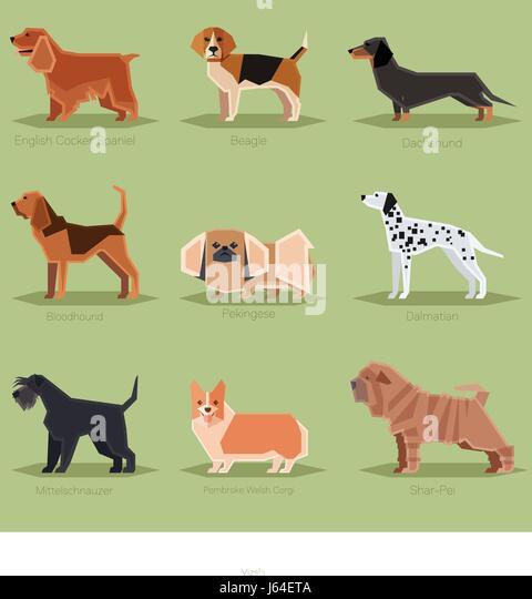 Dog Toys Birmingham Uk