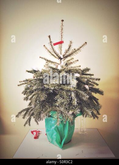 Sad Christmas Tree Stock Photos Amp Sad Christmas Tree Stock