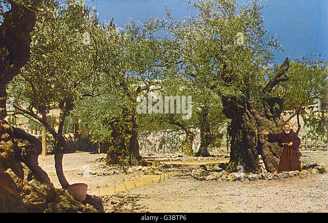 Garden Of Gethsemane Jerusalem Stock Photos Garden Of Gethsemane