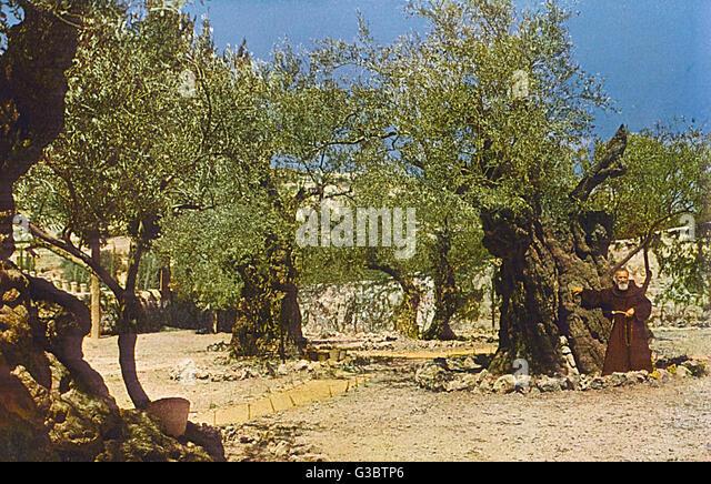 Garden Of Gethsemane Jerusalem Stock Photos Garden Of Gethsemane