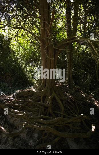 how to kill tree roots uk