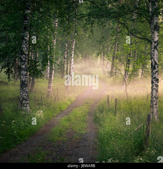 Landscape with idyllic road and fog at summer evening in Finland - Stock Image