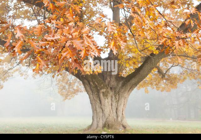 oak island big and beautiful singles Search for local 50+ singles in california  midwestgirl75 oak park, ca 1 more photo 61 years old 5' 5 big & beautiful black hair white / caucasian non-smoker.