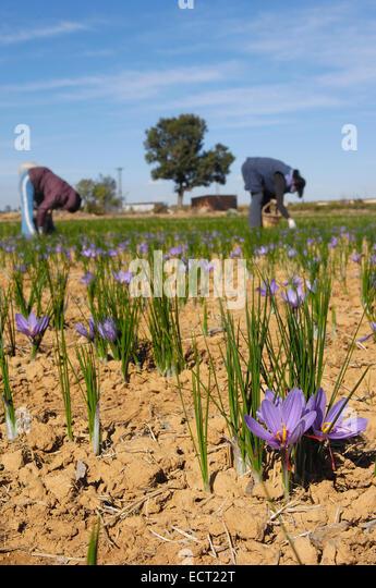 flower picking machine