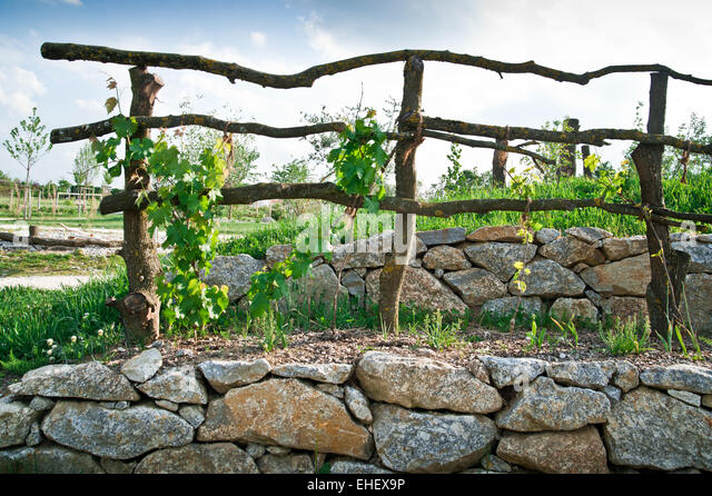 Grape Trellis Stock Photos Amp Grape Trellis Stock Images