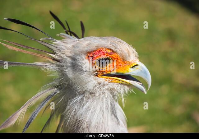 Claws Bird Close Up