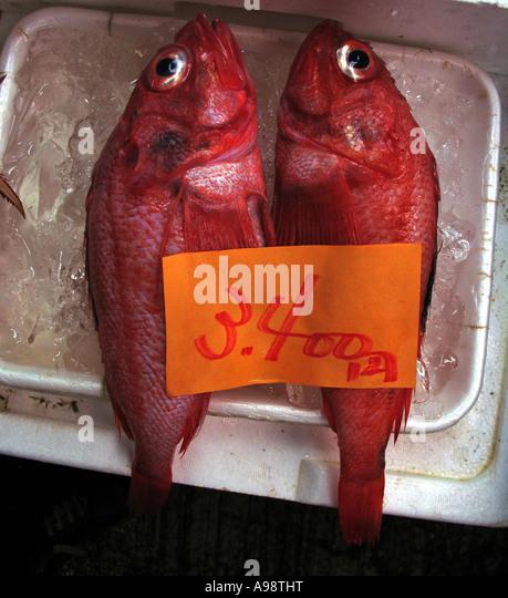 Shiogama fish market stock photos shiogama fish market for Fish stocking prices