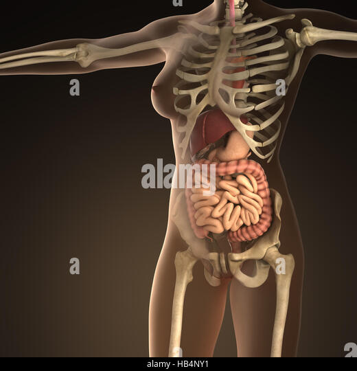 human bones in blue anatomical stock photos & human bones in blue, Skeleton
