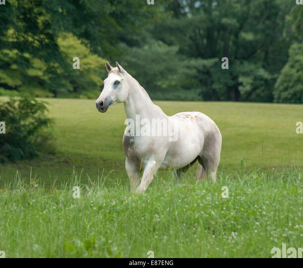 appaloosa stock photos amp appaloosa stock images alamy