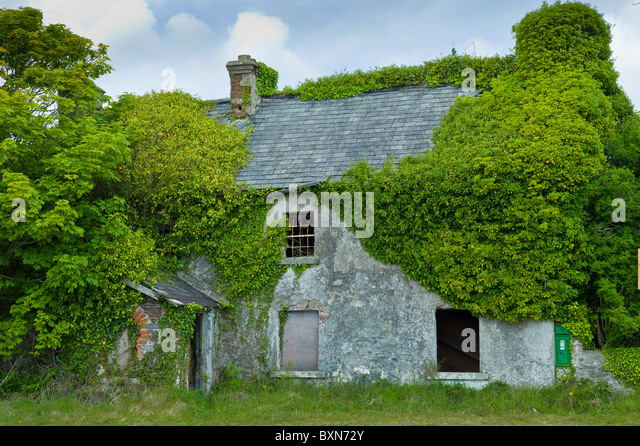 Derelict Cottage For Sale In Need Of Renovationcovered Ivy And Other Creepers