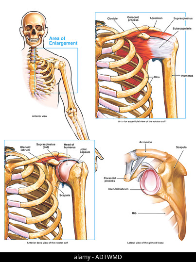 how to fix dislocated hyoid bone