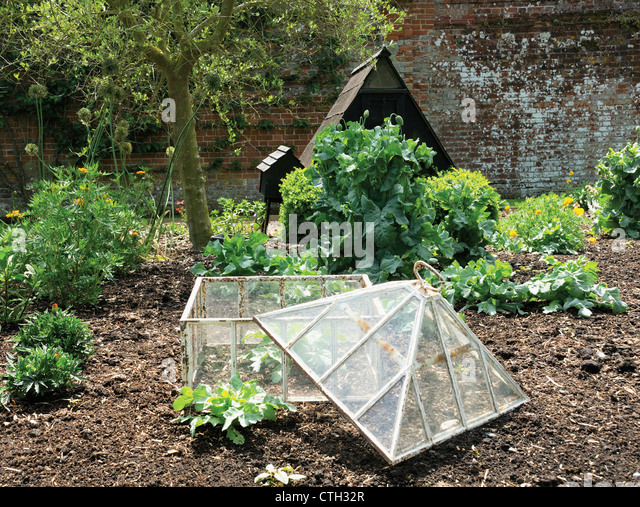 Papaver poppy and other plants in a garden with an open glass frame