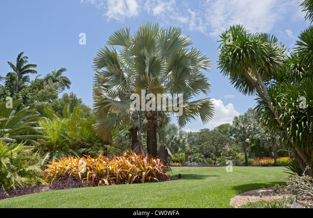 Bismarckia Stock Photos Bismarckia Stock Images Alamy